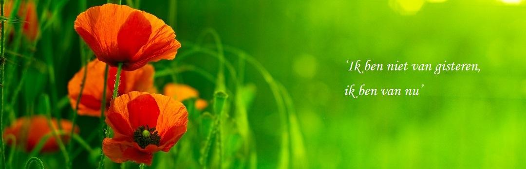 rode klaproos in het gras met quote: ik ben niet van gisteren, ik ben van nu