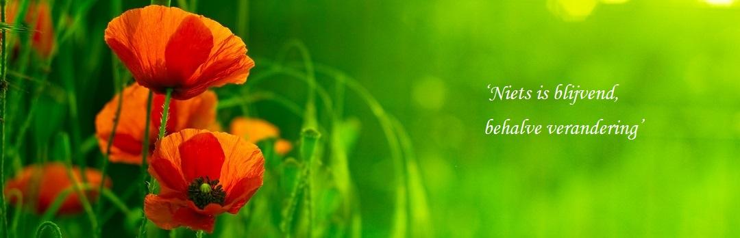 rode klaproos in het gras met quote: niets is blijvend, behalve verandering
